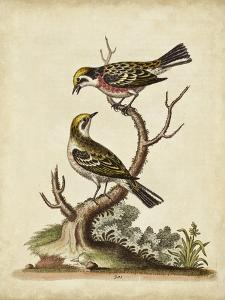 Edwards Bird Pairs II by George Edwards