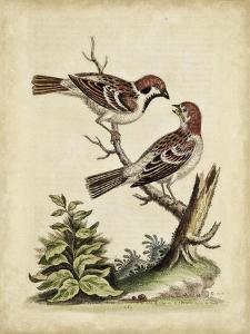 Edwards Bird Pairs VI by George Edwards