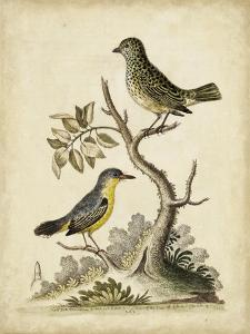 Edwards Bird Pairs VII by George Edwards