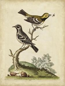 Edwards Bird Pairs VIII by George Edwards