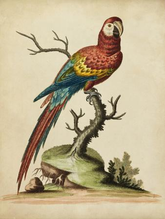 Edwards Parrots I