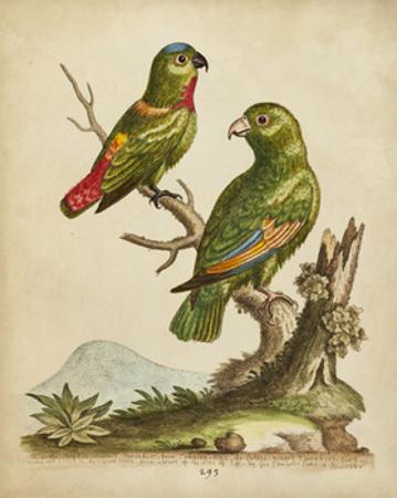 Edwards Parrots VI