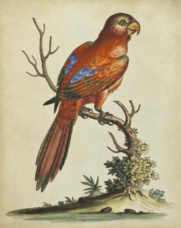 Paradise Parrots III