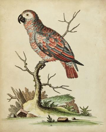 Paradise Parrots IV