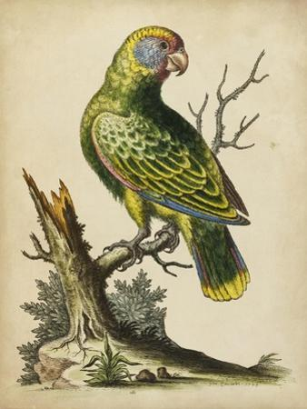 Paradise Parrots V
