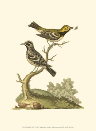 Petite Bird Study II
