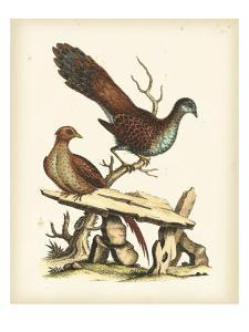 Regal Pheasants I by George Edwards