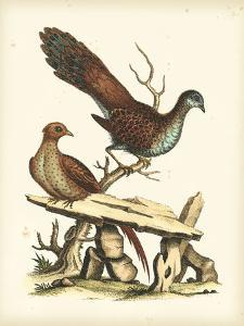 Regal Pheasants I by George Edwards