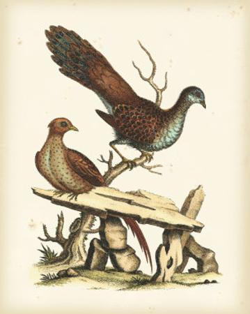 Regal Pheasants I