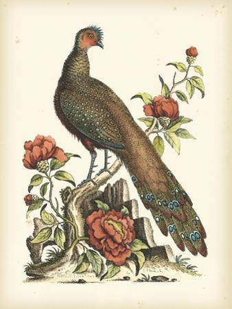 Regal Pheasants III