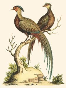 Small Regal Pheasants II by George Edwards