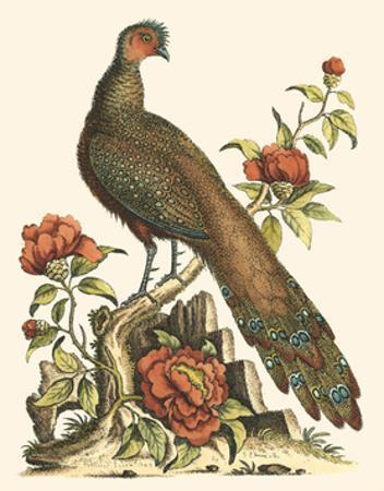 Small Regal Pheasants III