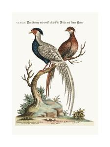 The Black and White Chinese Cock Pheasant with its Hen, 1749-73 by George Edwards