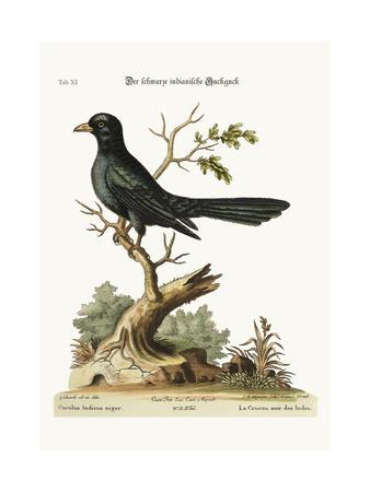 The Black Indian Cuckow, 1749-73