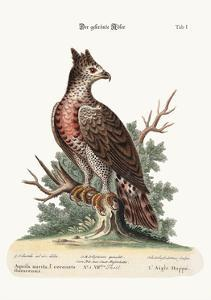 The Crowned Eagle, 1749-73 by George Edwards