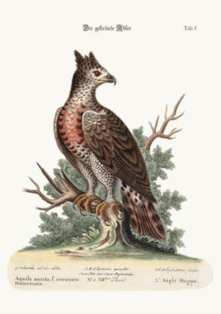 The Crowned Eagle, 1749-73