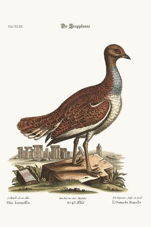 The Hen Bustard, 1749-73