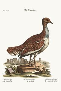 The Hen Bustard, 1749-73 by George Edwards