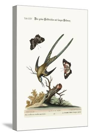 The Long-Tailed Green Hummingbird, 1749-73
