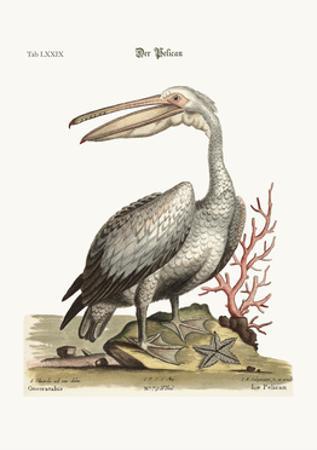 The Pelican, 1749-73