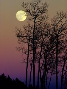 A Full Moon Shines on Winters Leafless Branches by George F^ Mobley