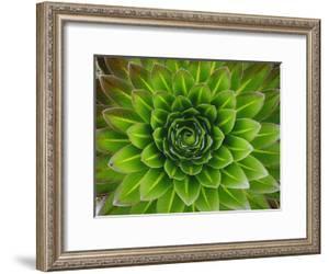 A Giant Lobelia Plant by George F^ Mobley