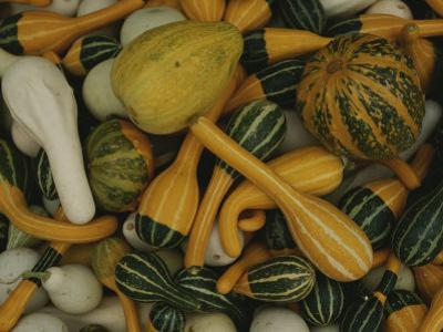 An Assortment of Gourds by George F^ Mobley