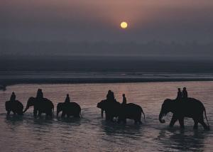 Elephants Lumber into River at Sonpur by George F^ Mobley