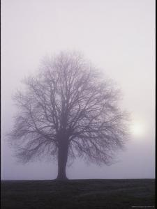 Tree in the Morning Mist by George F. Mobley