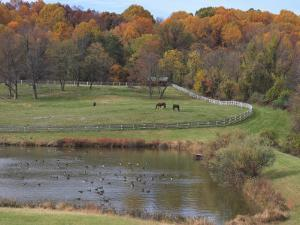 Fall Scenic of Horse Farm and Pond with Canada Geese by George Grall