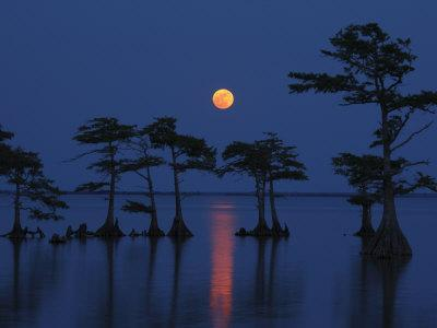 Full Moon Rises Above Cypress Trees at Lake Mattamuskeet