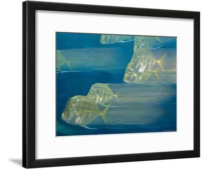 Lookdown Fish in Motion, Atlantic Ocean
