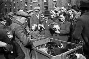 Bethnal Green Wast London Street Pet Market 1946 by George Greenwell