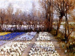 A Crocus Field in Spring, C.1889 by George Hitchcock