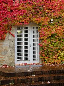 Augustine Door and Ivy by George Johnson