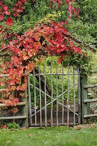 The Garden Gate by George Johnson