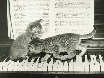 Two Kitten Playing on Piano Keyboard