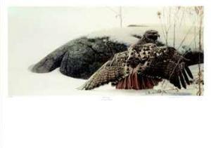 Mantling - Red-Tailed Hawk by George Mclean