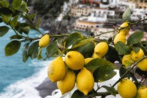 Amalfi Coast Citrus Fruit, Positano, Italy by George Oze