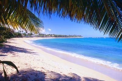 Beach View from Under a Palm Tree, Puerto Rico by George Oze