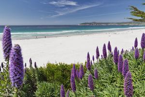 Carmel Beach Spring Vista, California by George Oze