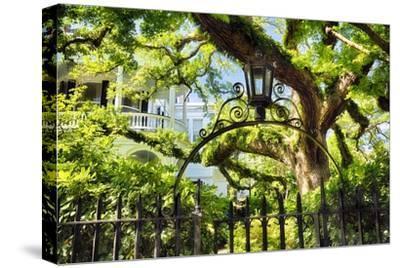 Charleston Villa Garden With Live Oak Tree