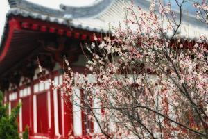 Japanese Plum Tree Blossom by George Oze