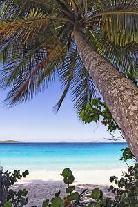 Leaning Palm, Trunk Bay, US Virgin Islands by George Oze