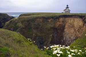 Lighthouse and Lilies, Point Cabrillo, Mendocino by George Oze