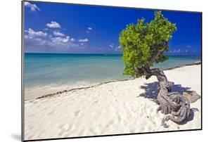 Lone Divi Tree on a Beach, Aruba by George Oze