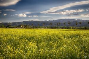 Napa Valley Spring Meadow, California by George Oze