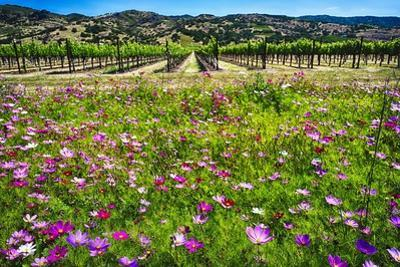 Napa Valley Wildflowers And Grapevines by George Oze