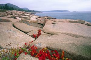 Otter Point, Acadia National Park, Maine by George Oze