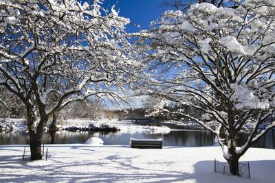 Snow Covered Trees at Riverside
